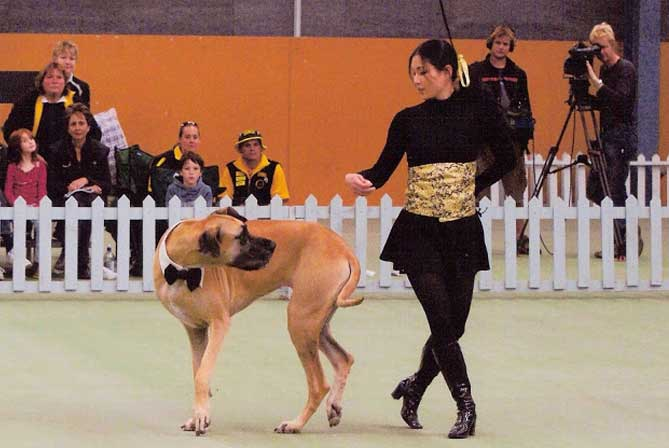 freestyle canino